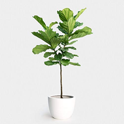 house plants for staging